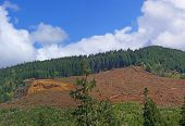 Panorama - Clear Cut Logging Slope