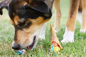 Dog Eating Ice Cream Cone On Ground