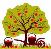 image of hand-barrow  - vector apple tree and hand barrow with basket of apples - JPG