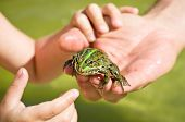 Frog sitting on a human hand looking at the camera