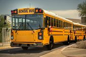 stock photo of bus driver  - School bus - JPG