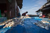 PADANG - AUGUST 25: Freshly caught fish is put out on display for sale at a village market in Padang