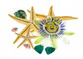 Tropical Still Life, The Starfish, Cockleshells, Passionflower Are Isolated On The White