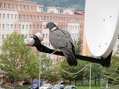 Pigeon sitting on satellite dish