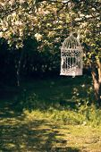 Empty birdcage amongst spring blossom in the orchard