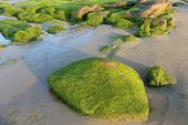 Moss on stones in the morning at Co Thach beach , Tuy Phong , Binh Thuan province , Vietnam.