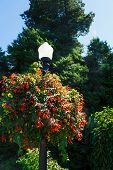 Flower Baskets On Lamp Post