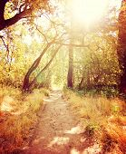 a forest or park with trees with autumn leaves toned with a retro vintage instagram filter