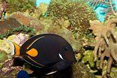 Achilles Tang In Aquarium