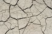 Dried Ground
