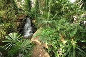 A overview of a tropical meadow with plants and waterfall and stones in the Nong Nooch tropical bota