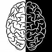 Brain shape