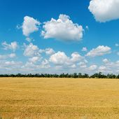 cloudy sky and field after harvesting