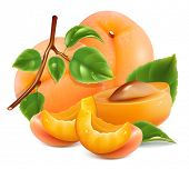 Apricots, slices of apricots with green leaves and water drops. Vector illustration.