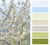 flowering color chart palette swatches