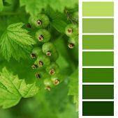 unripe currant color chart palette swatches