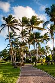 Coconut palms lining a paved road winding through green lawns on a tropical island paradise symbolic