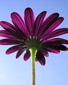 Purple flower closeup from below