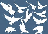 illustration with pigeon silhouettes isolated on blue background