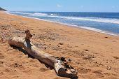 Driftwoof on beach