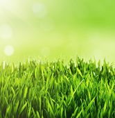 Green grass background. Fresh green grass with blurry green bokeh sunny background.