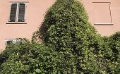 climbing vegetation on the wall