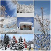 Winter Collage With Snow, Forest - Winter Season - Snowy Trees