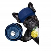 image of beside  - dog as personal trainer with gold medal beside a white and blank banner or placard lifting a big dumbbell - JPG