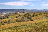 View on beautiful yellow autumnal hills with vineyards in Piedmont, Northern Italy.