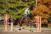 Young Woman Jumping Barrier On Brown Horse In Autumn