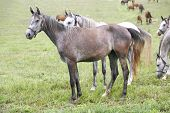 Gray horse standing alone in pasture
