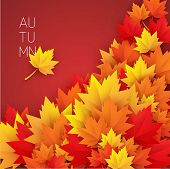 beautiful autumn leaves vector background