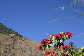 Flowers in the Himalayas