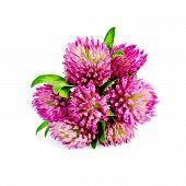 Clover bouquet
