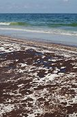 stock photo of bp  - Oil covered white sands of a Gulf Coast beach in Florida - JPG