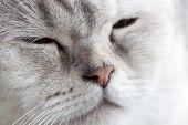 Sleepy blue eyes