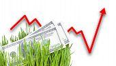 Growing Money In Grass