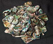 Pile Of Paua Shells