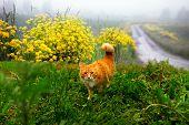 Hunting Ginger Cat