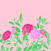 Pink hand drawn aster flowers horizontal seamless pattern, vector