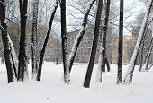 Landscape. Trees In Snow Against The Residential Quarter.