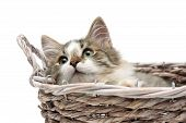 Fluffy Kitten Lying In A Basket On A White Background