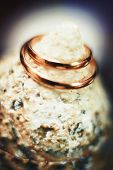 Wedding Rings On The Shell