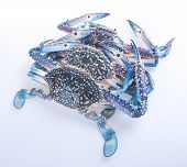 image of crab  - crabs - JPG