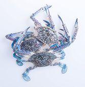 pic of crab  - crabs - JPG