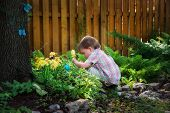 image of boys  - A little boy crouched down looking for Easter eggs in a garden on an Easter egg hunt during the spring season - JPG