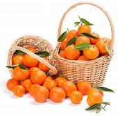 Ripe Tangerines With Green Leaves In A Two Basket