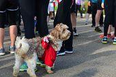 Dog Runner