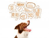 foto of white bark  - Cute brown and white border collie with barking speech bubbles above his head - JPG