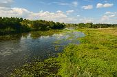 stock photo of marsh grass  - Rural landscape with river and water lilies and lots of shore grass - JPG